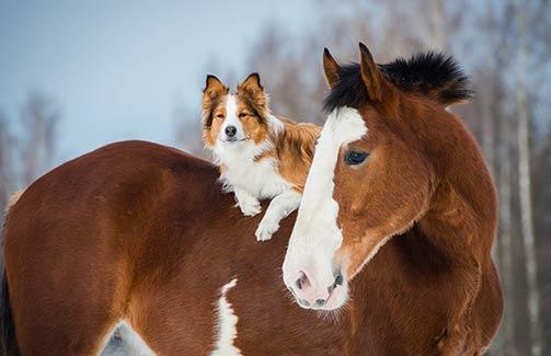 Animal Care & Hygiene